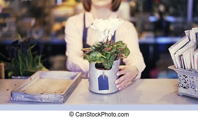 Florist shop saleswoman putting potted flowers on the counter to show