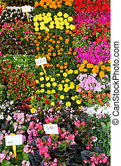 Florist shop with flowers in pot with price label