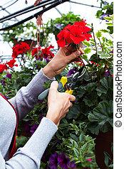 Florist woman cutting flowers.