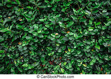 Floristic background. Green leaves on wall.