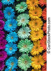 floristic, dekoration, schoenheit, blumen, bunte, gerbera
