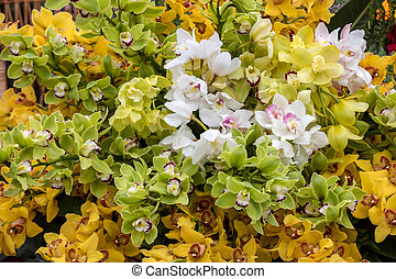 floristic, dekoration, schoenheit, tropische blumen, bunte