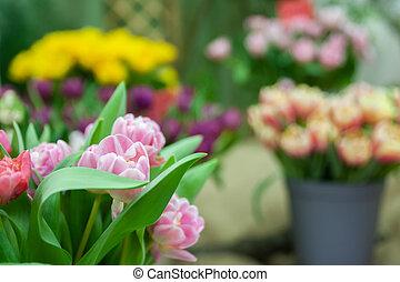 floristik, verkauf, von, flowers., delikat, rosa, tulpen, in, a, wischeimer, umgeben, per, andere, flowers.