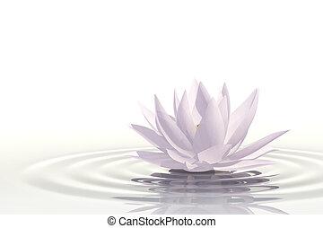 flotar, waterlily
