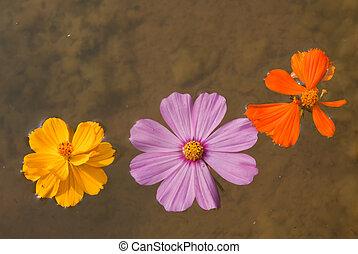 flotter, fleurs