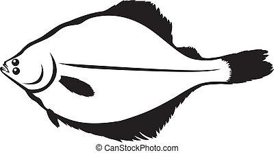 Flounder - Contour image of fish flounder