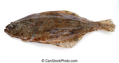 Flounder fish - Fish flounder on white background