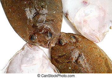 Flounder fishes - Four head of fresh flounder fishes from ...