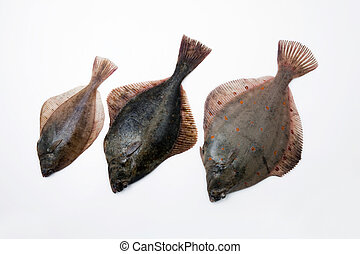 Flounders - Dab, Flounder and a Plaice lying next to each...