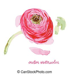 flover 3 - vector illustration watercolor, red rose with ...