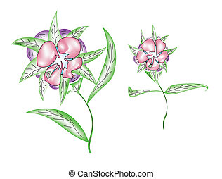 Flover - illustrated pink flowers on a white background