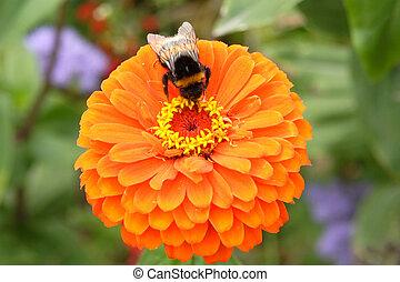 flowe, abeille
