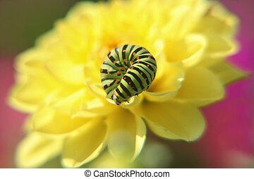 flowe, chenille, jaune
