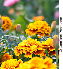flowe, floraison, coloré