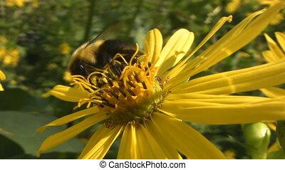 flower., пчела