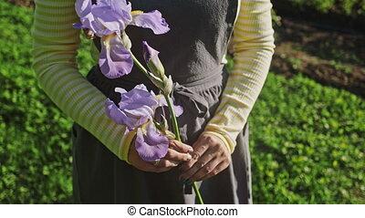 flower., солнце, фартук, прут, место действия, motion., садовник, красивая, ирис, медленный, holds, руки, женщина, сад, flare., ее, за работой
