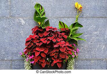 Flower against a wall