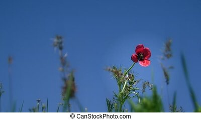 Flower Against The Sky - A beautiful red flower on a...
