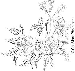 Flower alstroemeria, contour - Flowers alstroemeria, vector,...