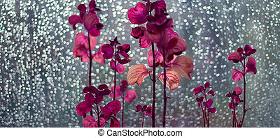 Flower and raindrops - Flowers and raindrops on the glass