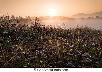 Flower and Sun rise at Phuthapboek Khoo kho , Phetchabun Thailand