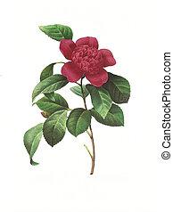 flower antique illustration