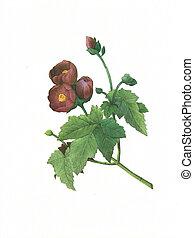 flower antique illustration malva
