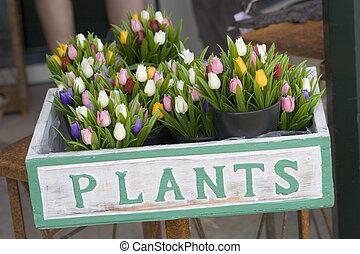 arrangement - flower arrangement