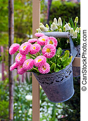 Flower arrangement - Pink daisies in the metal hanging...
