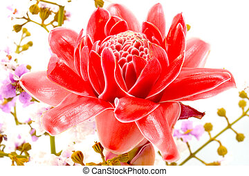 Flower arrangements with pink torch ginger flowers...