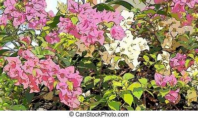 flower art footage background