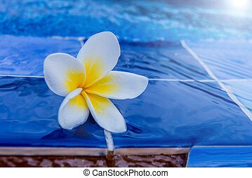 flower at the swimming pool