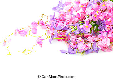 flower background - Flowers background, colorful blossom of ...