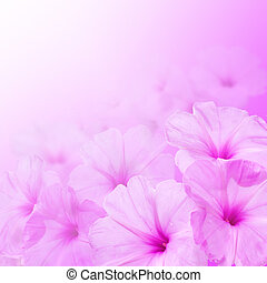 Flower background. Morning glory flowers to create a...