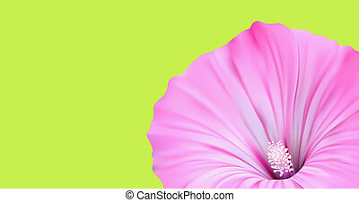 Flower Banner Nature Design