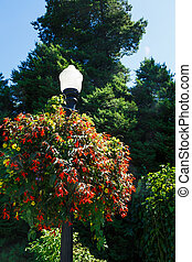 Flower Baskets on Lamp Post