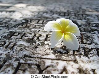 Flower - Beautiful ochroleucous flower on a background of a...
