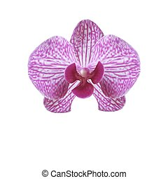 Flower beautiful purple orchid on a white background. illustration