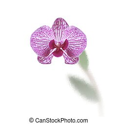 Flower beautiful purple orchid with stem and leaves isolated on white background. illustration