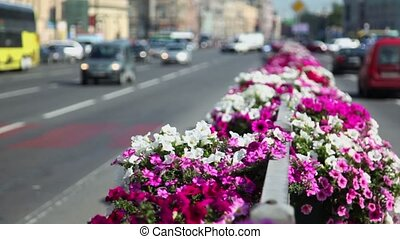 Flower bed at dividing strip on road with city traffic