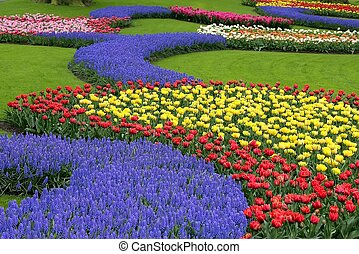 Flower bed in Keukenhof gardens - Multicolored flower bed, ...
