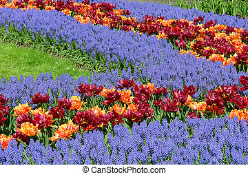 Flower bed in Keukenhof gardens