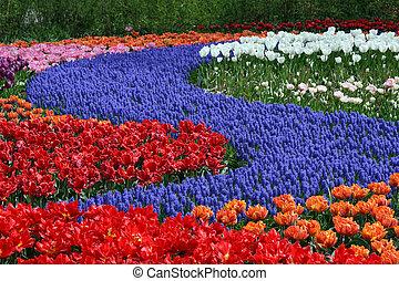 Flower bed in Keukenhof gardens - Multicolored flower carpet