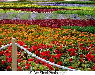 Flower-bed of many-colored flowers