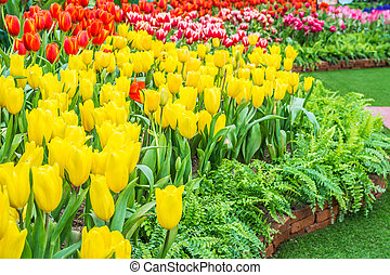 Flower bed of multicolor tulips at summer.