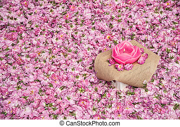 Flower bed of pink rose flowers