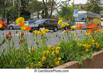 Flower bed with flowers beside the road