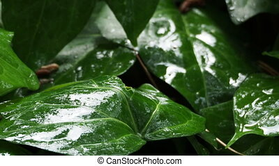 Flower bed with plants under the rain. Wet foliage shining of raindrops.