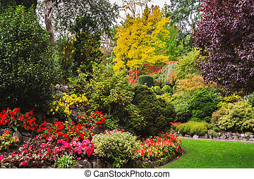 Flower beds of colorful flowers - Flower beds of colorful...