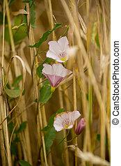 flower between crops